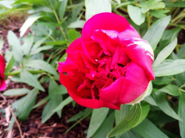Aufnahme Blume